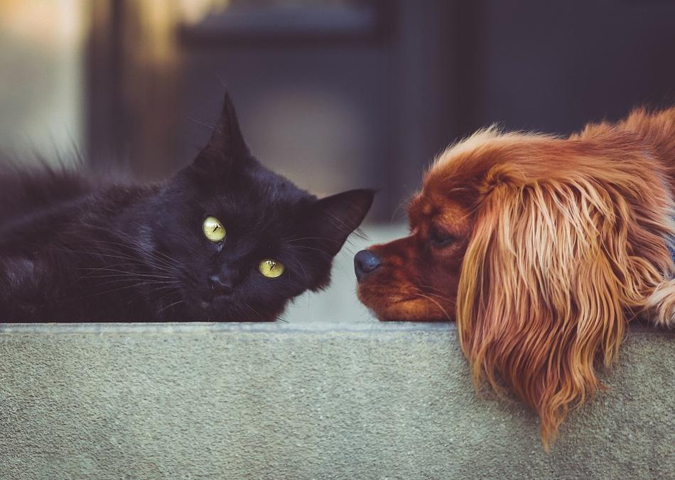 chien-chat.jpg