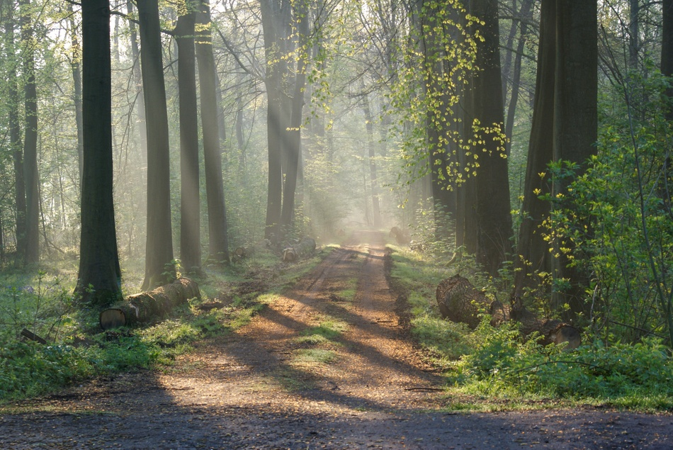 Bois de la Haye du Roeulx
