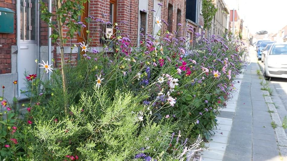 Fleurs rue Houdeng